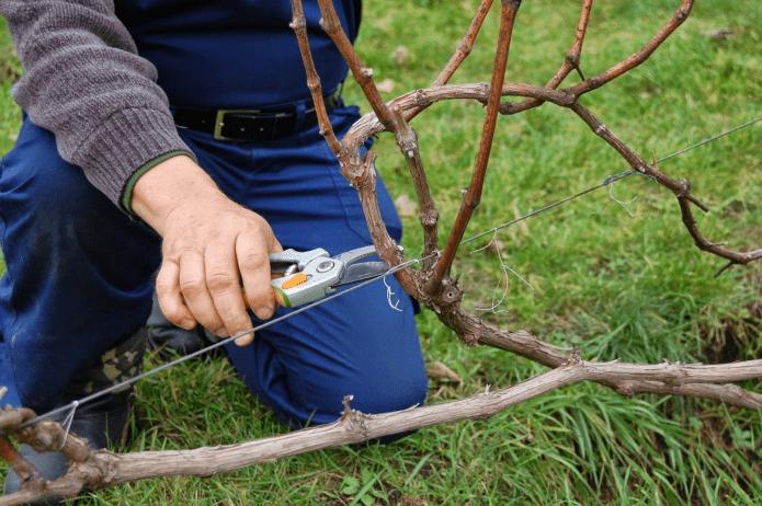 Пять типичных ошибок, которые совершают садоводы при осенней обрезке сада
