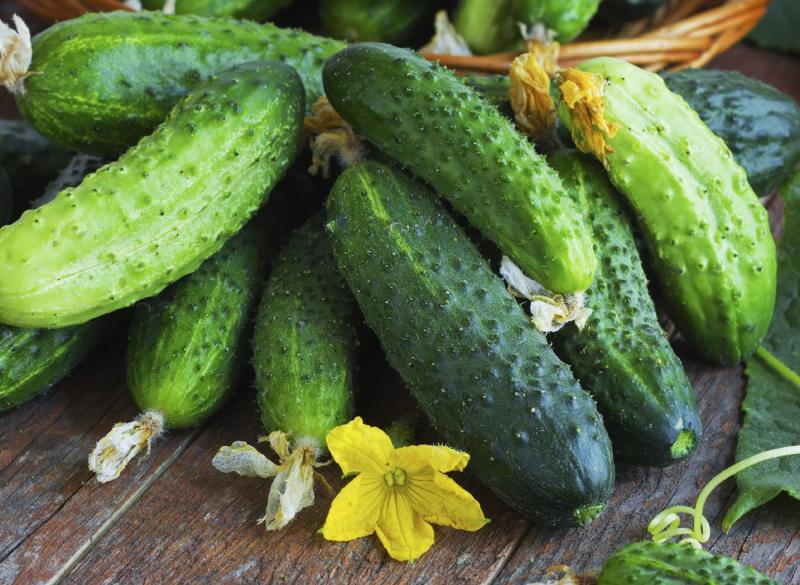 Семена огурцов разных сортов и гибридов: выбор качественной посевной продукции