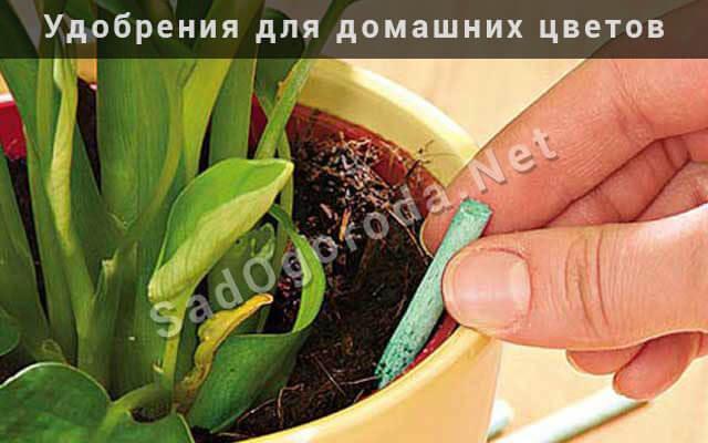 Удобрения для комнатных цветов в домашних условиях