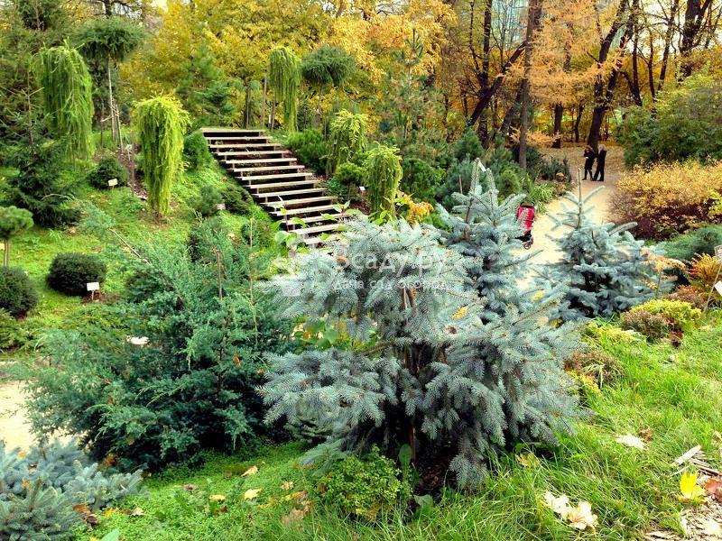 Хвойные растения в дизайне дачного участка - от гигантов до карликов