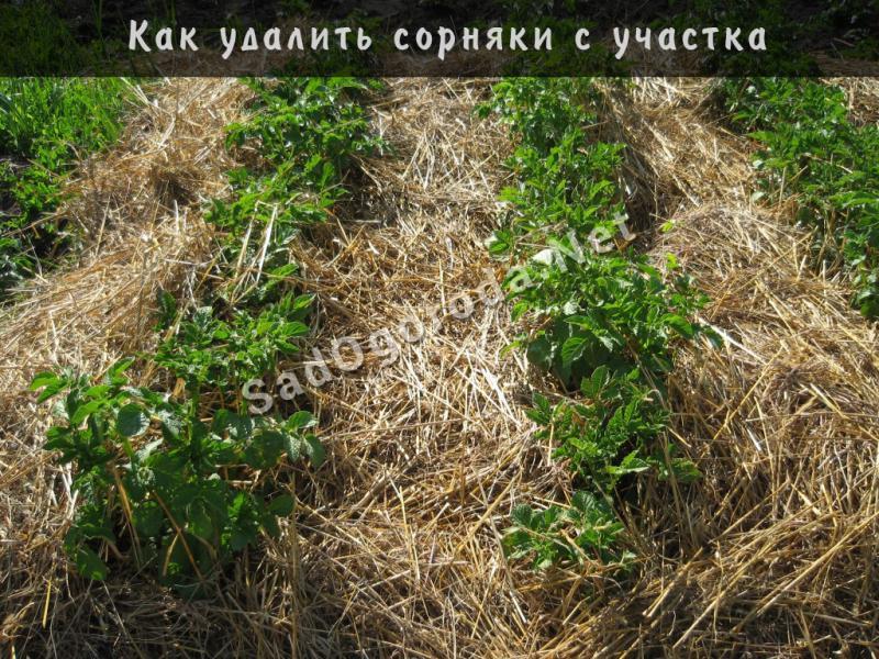 Как убрать сорняки, как вывести сорняки на даче