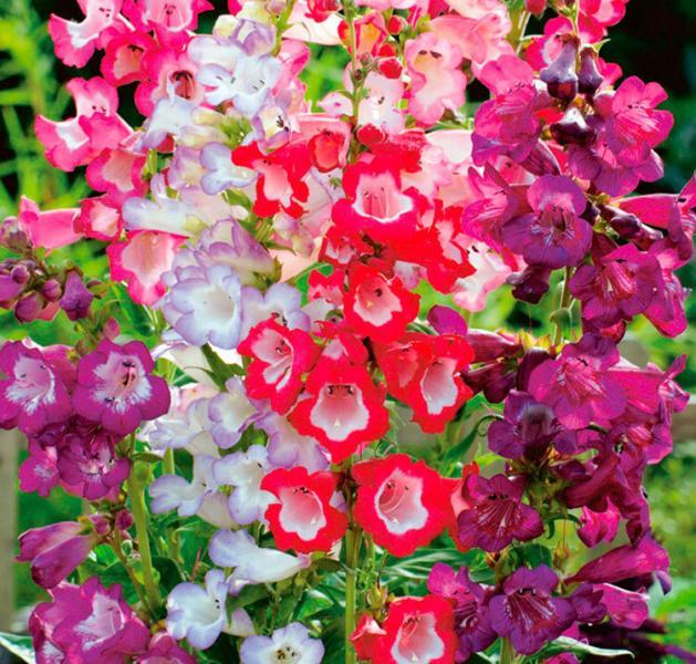 Цветет все лето