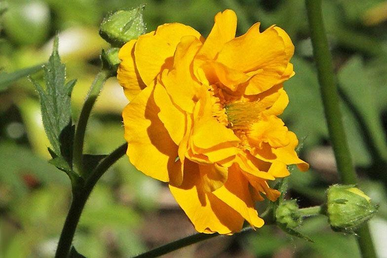 Цветок, который легко растёт и долго цветёт