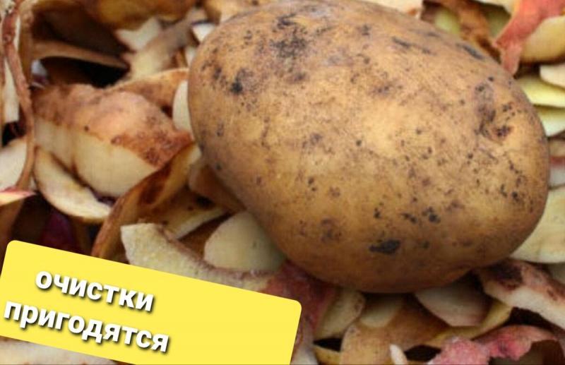 Готовим подкормку для рассады из картофельных очисток