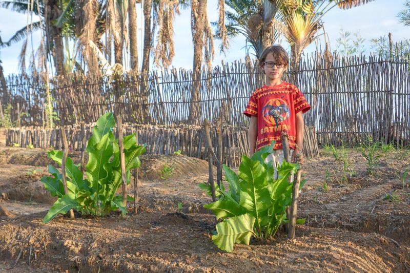 Огород в тропиках. Версия 3.0 🍆🍅