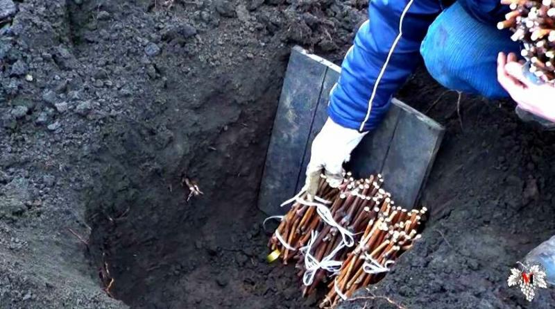 План работ на винограднике в феврале. Сезон 2020