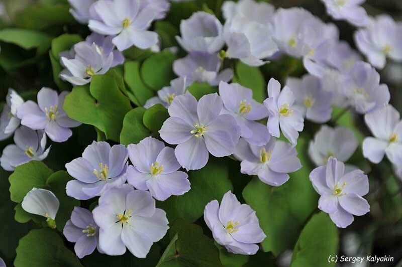 Ранние цветы: дайджест из 11 статей