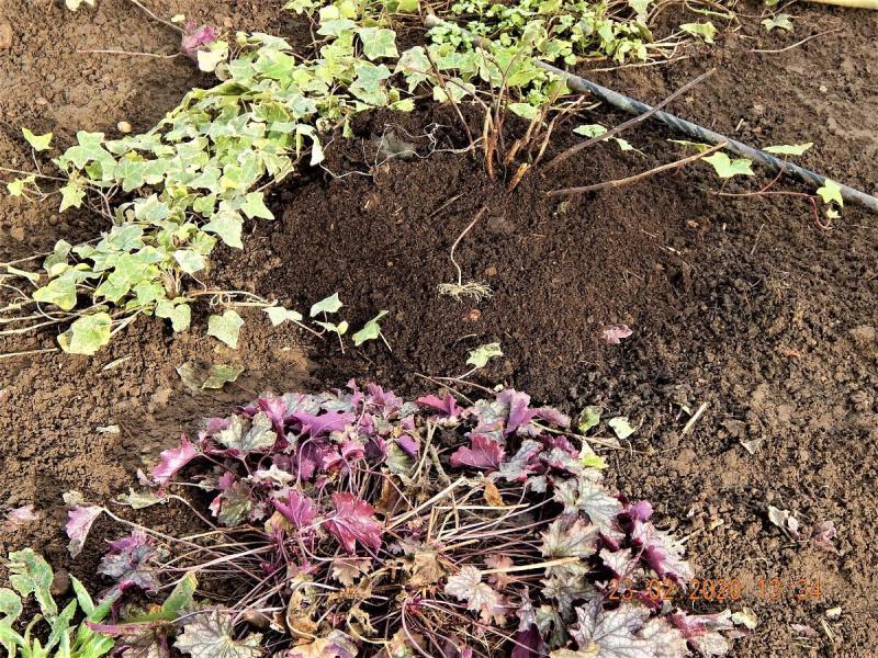 Ранняя весна сдвинула график работ в саду.