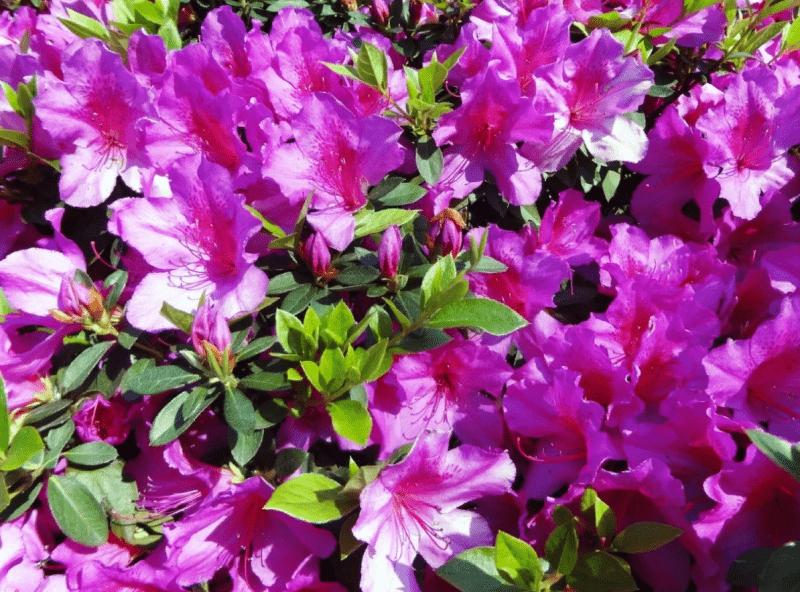 Самые красивые цветы мира. Они воодушевляют даже на фото.