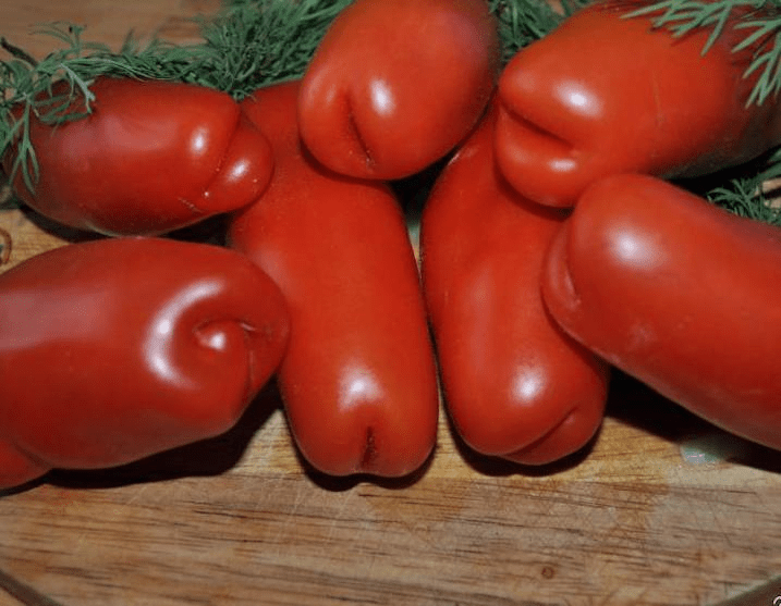 Самые оригинальные и урожайные томаты: сорта с фото