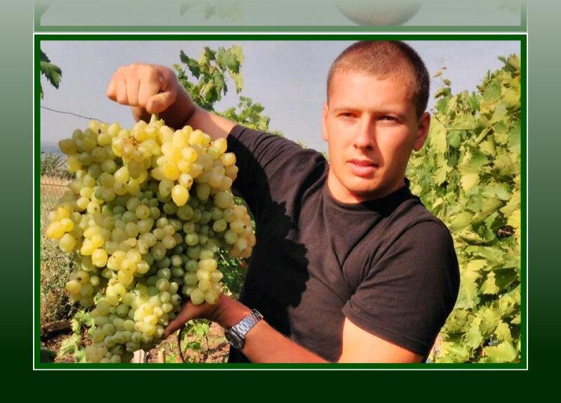 Секрет крупных гроздей винограда
