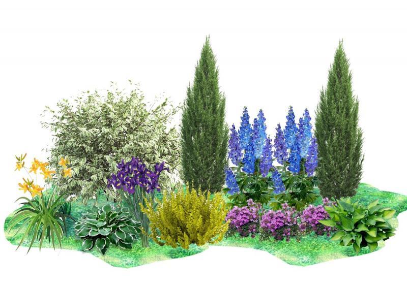 Схема цветущей клумбы из неприхотливых растений
