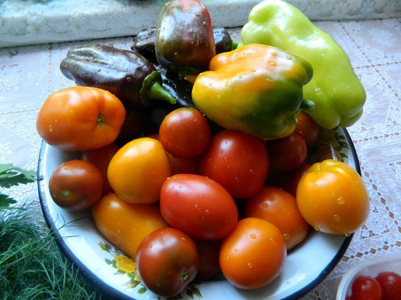 Всё о лучших сортах огурцов, перцев и томатов