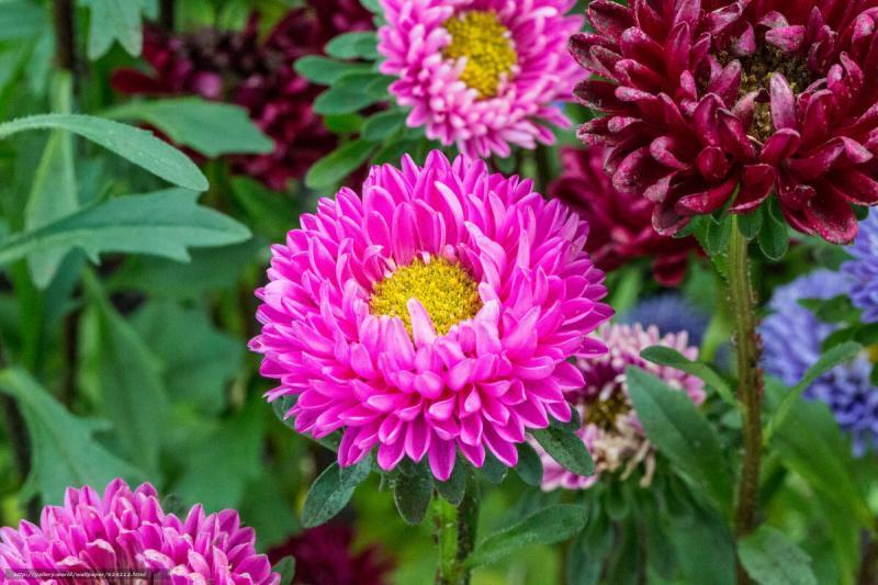 6 лучших цветов, которые я всегда сажаю в своем саду