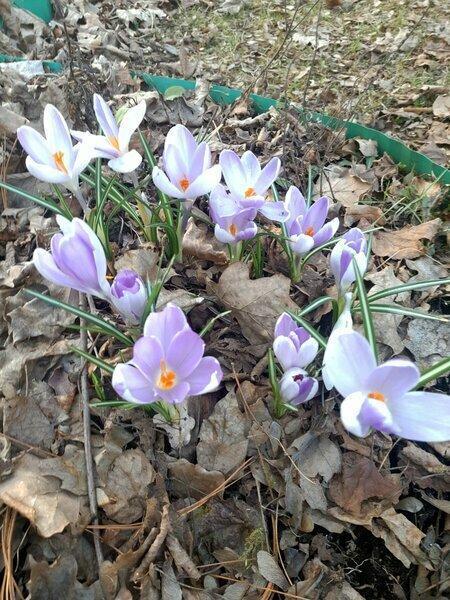 А тем временем в саду вовсю цветет весна...
