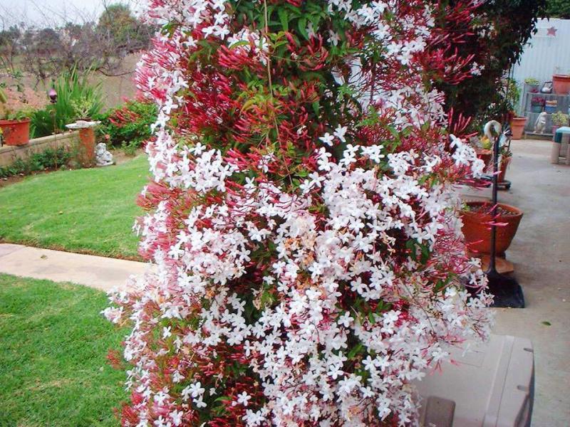 Ампельные красотки: растения-лианы для вашего шикарного сада