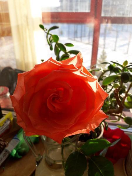 Букет тюльпанов и одна розочка.