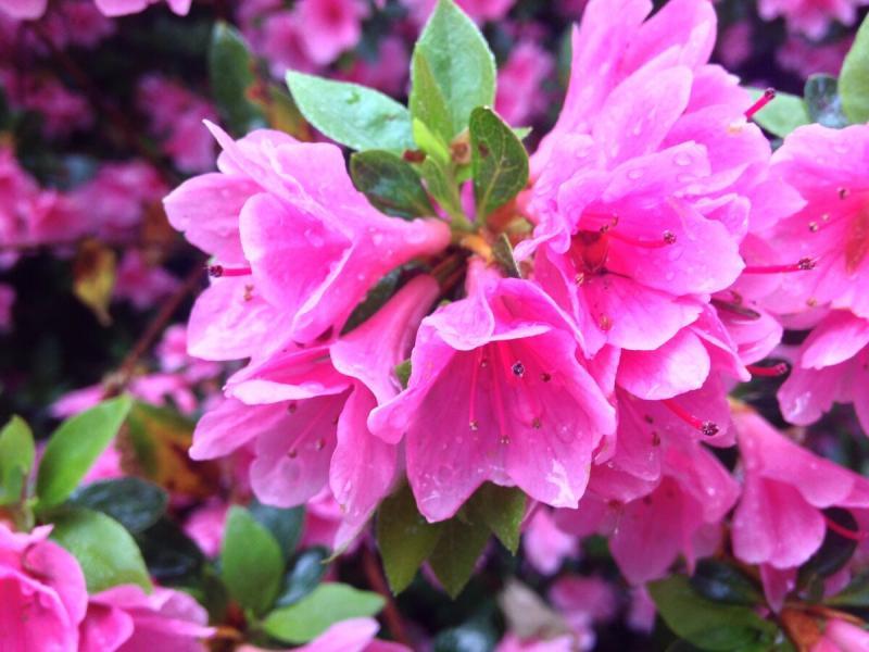 Цветы мертвые и живые