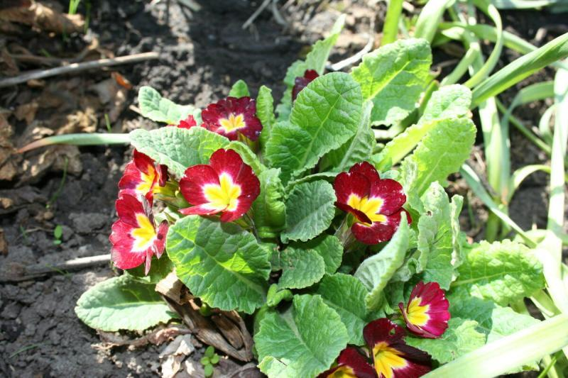 Хотите иметь сад неперывного цветения?