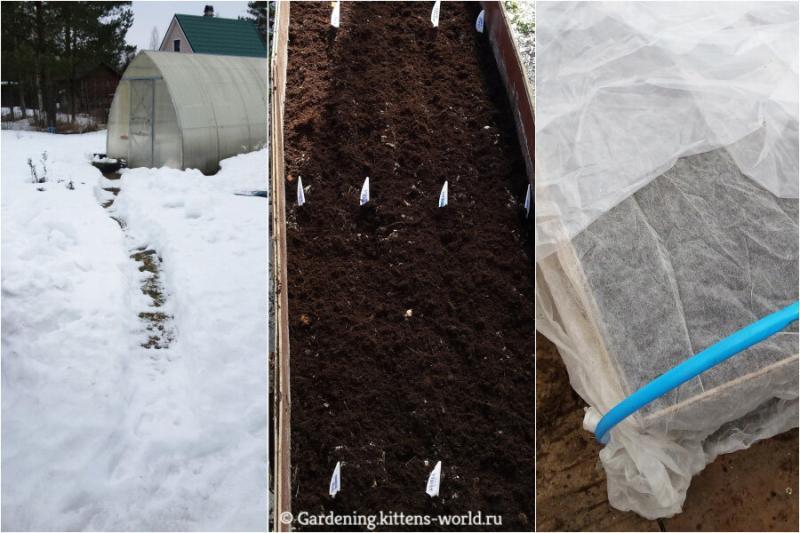 Как получить ранний урожай? 10 секретов посадки семян