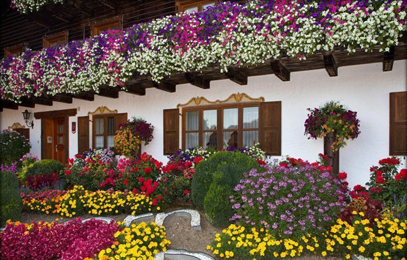 Как посадить цветы на даче красиво