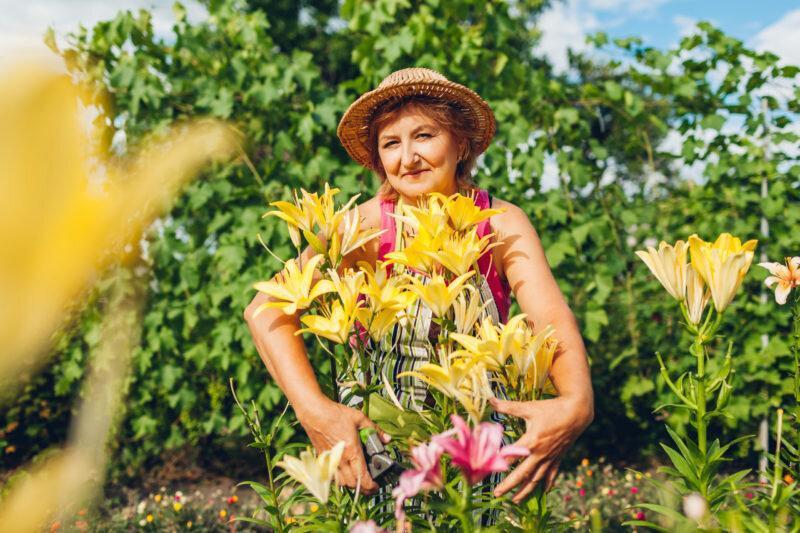 Как правильно ухаживать за лилиями после цветения