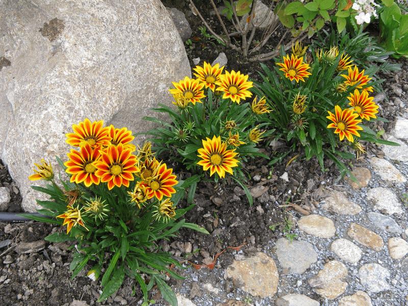 Какие цветы пора сеять в марте, чтобы они зацвели к лету