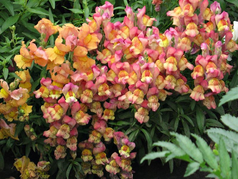 Какие однолетние цветы нужно посеять в марте на рассаду