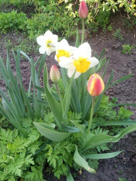 Многолетники - 8 простых в уходе, неприхотливых цветов