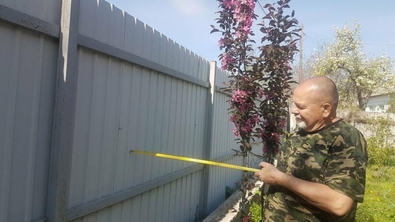 Продолжаем декорировать забор. Размножаем жимолость и клематис
