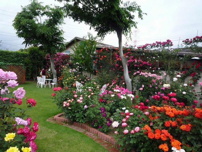 Розы в дизайне сада: оформление розария на участке