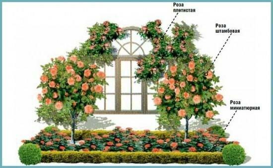 Создание плана-схемы розария