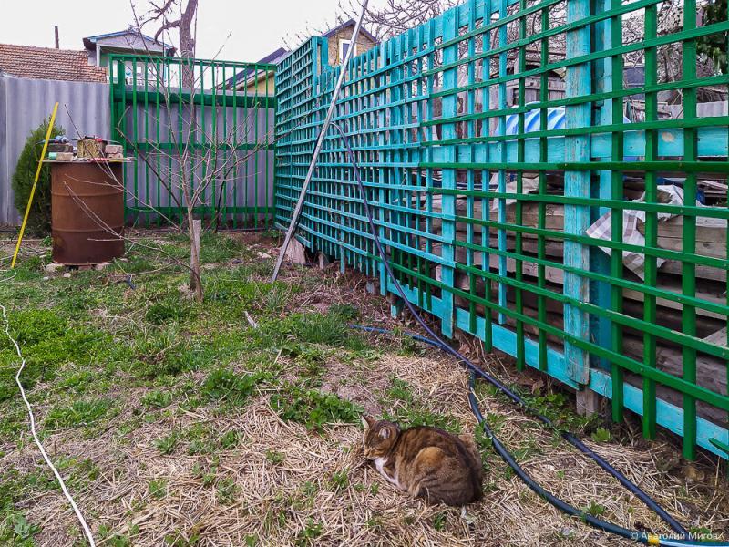 Строим шпалеры в саду. Конструкция, назначение, стоимость