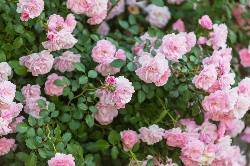 Строительная сетка в саду – идеи для дачника