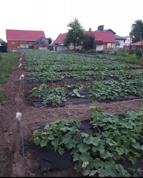Зачем в Рязанской области сеют огурцы на рассаду 23 марта.