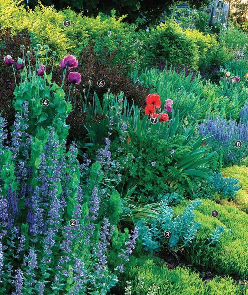 5 схем готовых цветочных клумб