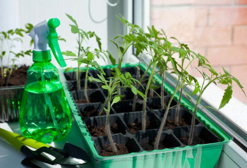Чем подкормить рассаду, чтобы была крепкой и здоровой