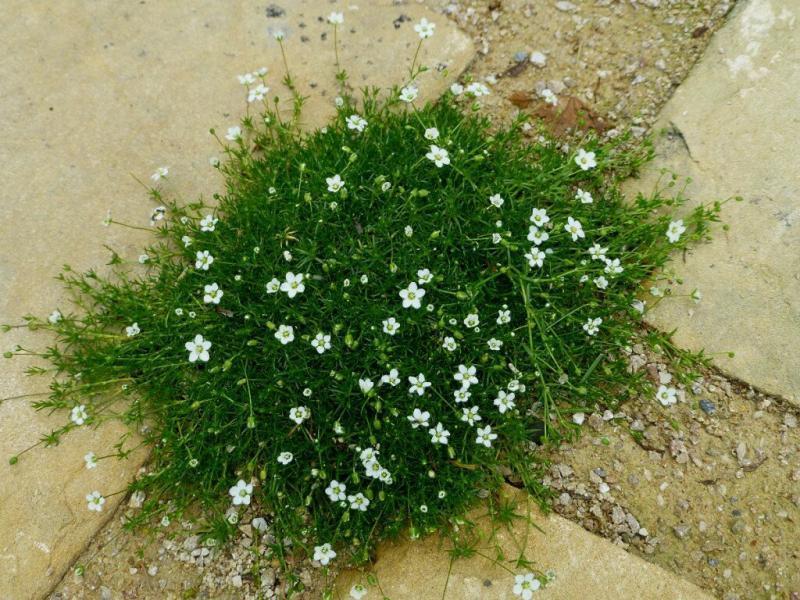 Незаменимые почвопокровные растения. Три многолетника.