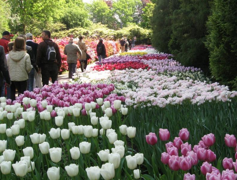 Парк цветов Кекенхоф. Тюльпаны