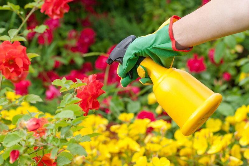 Полиантовая роза — особенности сорта и ухода за ним?