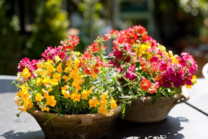 Садовые цветы, похожие на орхидеи