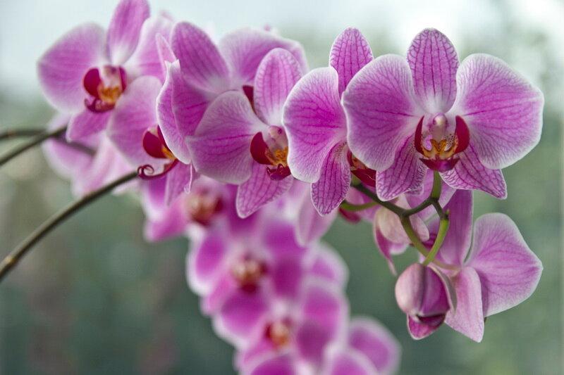 Уход и размножение орхидей в домашних условиях, фото цветов