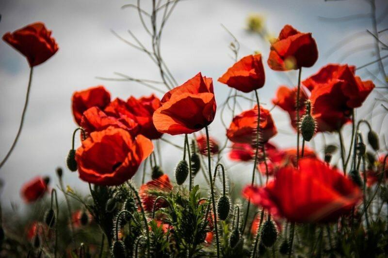 Выращивание цветов-двулетников: особенности, преимущества