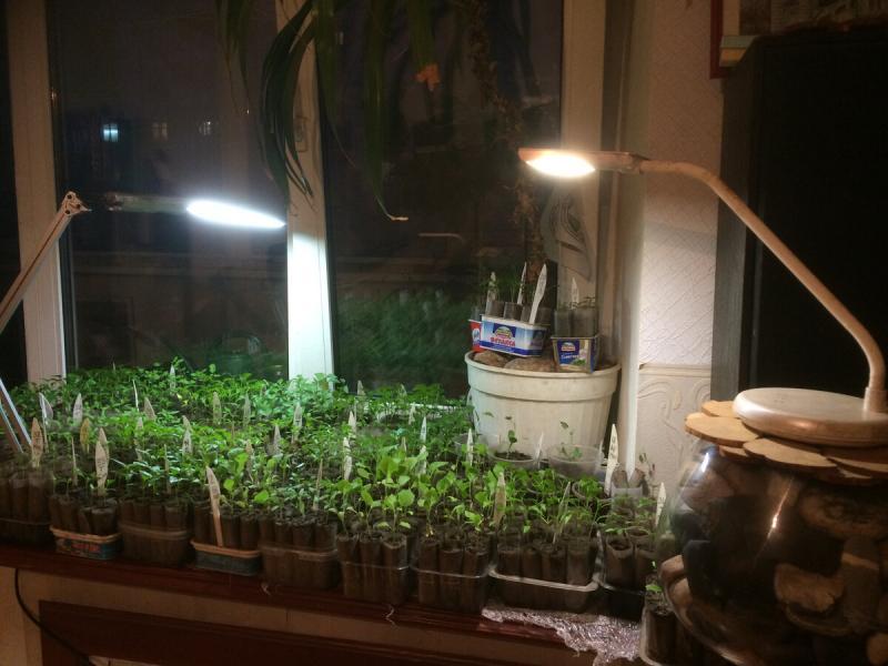 Выращивание рассады быстро.
