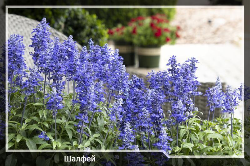 10 красивейших растений, которые будут украшать ваш сад все лето.