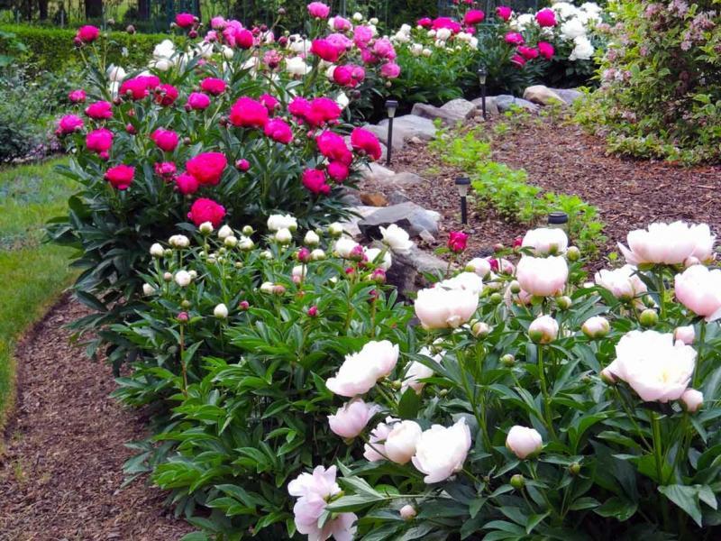 Как исправить некрасивый цветник