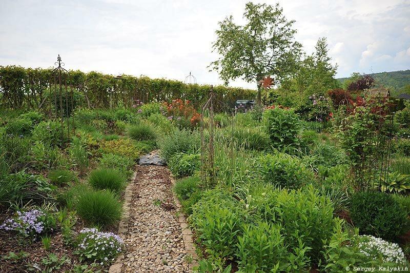 Мой сад на границе апреля и мая: зацвели клематисы