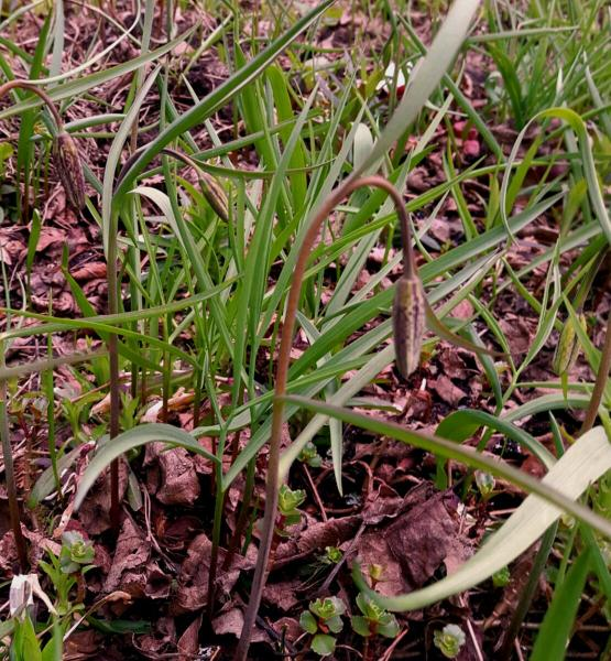 Мой сад в конце апреля