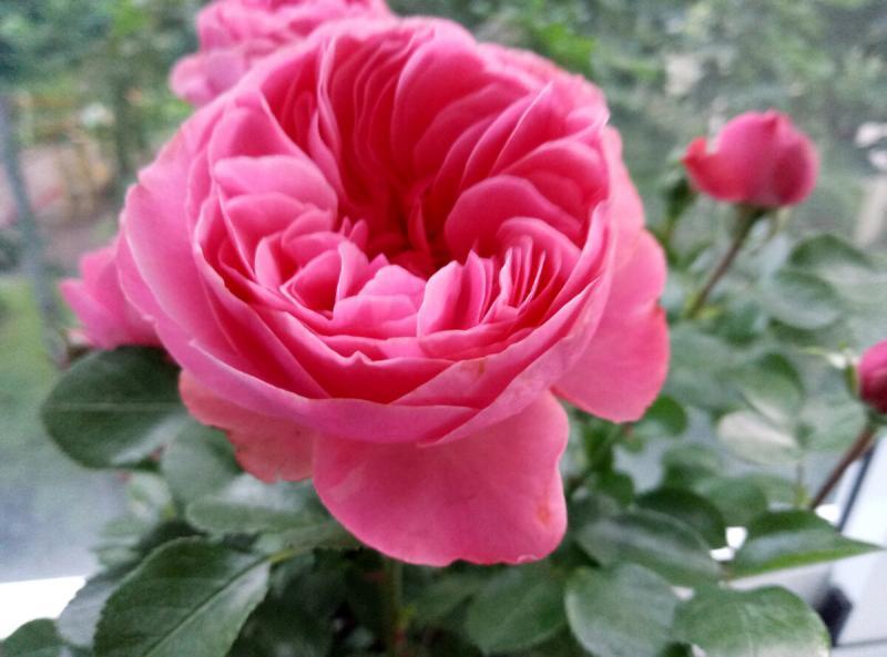 Розы и кони:)) Любовь навсегда
