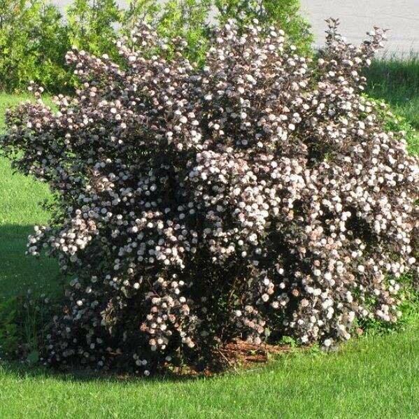 Выбираем декоративные кустарники, которые растут без проблем